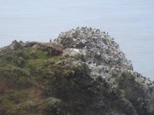 Birds on the rocks - cormorants and sea gulls