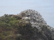 Birds on the rocks - cormorants and sea gulls