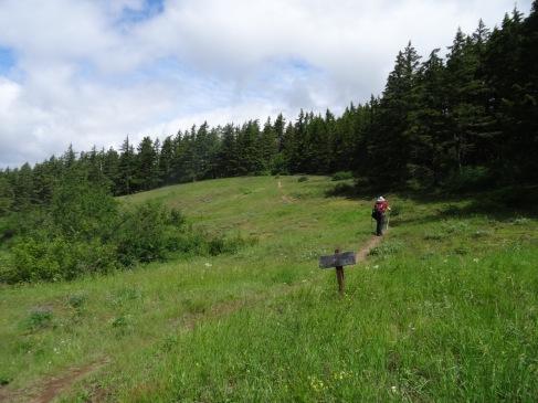 Trailhead meadow