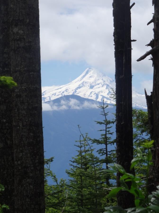 Mt. HoodBeargrass
