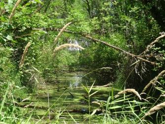 Shaded wetlands