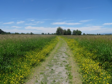 WIldflower/weed lined paths