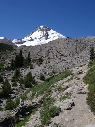 Looking up toward Mt Hood