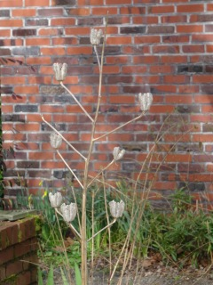 lily seedhead