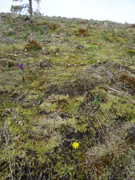 flowering outcrop