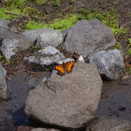 orange and blue butterflies