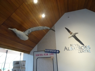 Royal Albatross Center