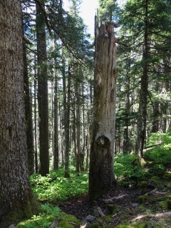 Tree guardian...