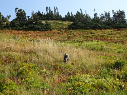 Marmots along the trail.
