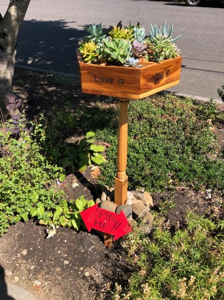 interactive succulent planter