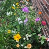 sweetpeas, zinnias and coreopsis